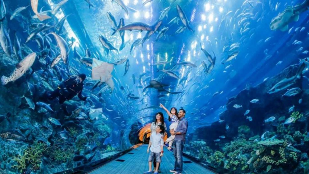 Dubai-Aquarium-and-Underwater-Zoo-Tourist-Attractions-In-UAE