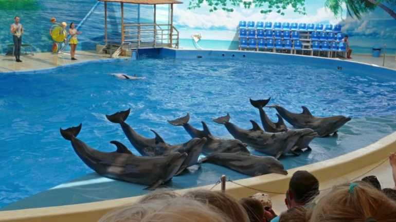 Dubai-Dolphinarium-Tourist-Attractions-In-UAE